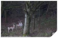 3 common fallow deers and 2 Melanistic Black deers, Print