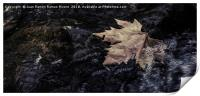 Dry leaf in the river, Print