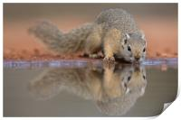 Squirrel mirror, Print