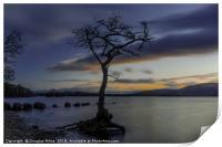 The Tree, Milarrochy Bay, Loch Lomond, Print