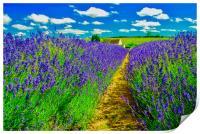 Snowshill Lavender Farm, Print
