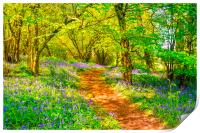 Bluebell Wood, Print