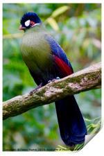 Exotic Multi coloured Bird, Loire Valley, France, Print