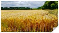 Field of Gold Wheat, Print