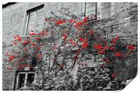Red Flowers and monochrome stone cottage, Print