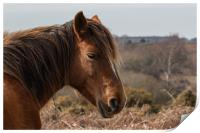 Wildlife image captured in The New Forest #2, Print