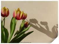 Tulip Shadows, Print
