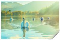 Swan Lake, Print