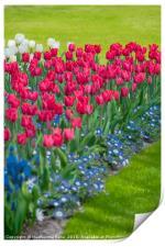 Spring flower arrangement , Print