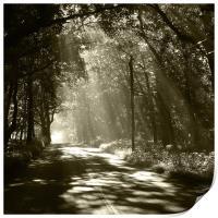 Sepia - Sunlight through the trees, Print