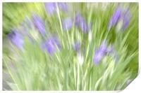 Joyous Flowers , Print