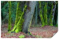 Moss Trees , Print