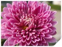 Beautiful Flower..... , Print