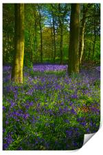 Chalet Wood Wanstead Park Bluebells, Print