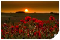 Sunset over poppies in Sussex, Print