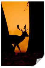 Deer Silouette, Print