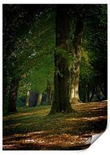 Toned Buxton Trees, Print