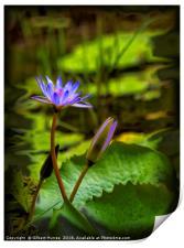 Beautiful Water Lilies, Print