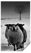 Wyrd Sisters,Farm animals, Print