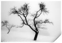 A tree in the snow, Print