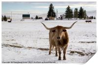 bull in the snow Wyoming WY USA, Print