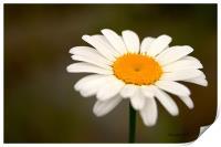 Daisy, Print