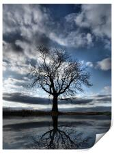 Wintering Oak Tree, Print