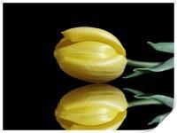Mirrored Tulip, Print