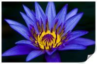 royal blue, Print