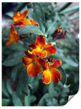 Bouquet, Print