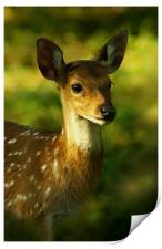 Little Bambi Deer, Print
