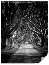 Dark path, Print