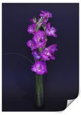 Gladiolus, Print