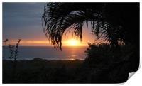 Sunset Through the Palms, Print