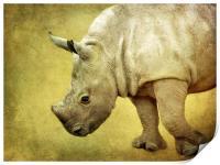 Baby Rhinoceros, Print