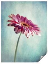 A Shade Of Pink, Print