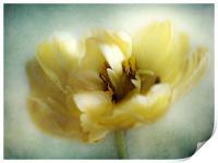 Yellow Tulip, Print