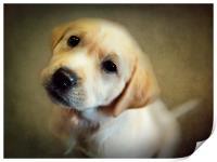Puppy Love, Print