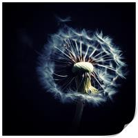 Dandelion Blowing In The Wind, Print
