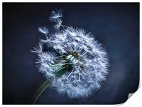 Dandelion Blues, Print