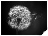 Dandelion Whispers, Print