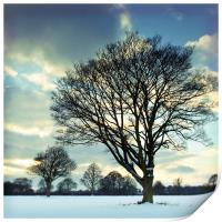 Winter trees, Print