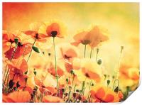 Sunlit Poppies, Print