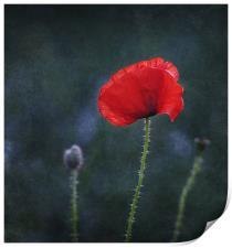 Poppy on a Dark Backround, Print
