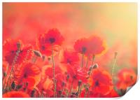 Poppies, Print
