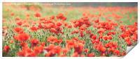 Poppy Field, Print