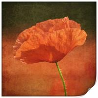 Poppy in a sea of red, Print