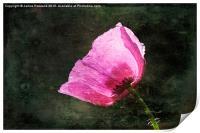 Poppy Sunshine, Print