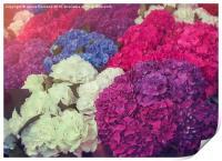 Hydrangea Mix, Print