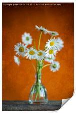 Oxeye Daisies, Print